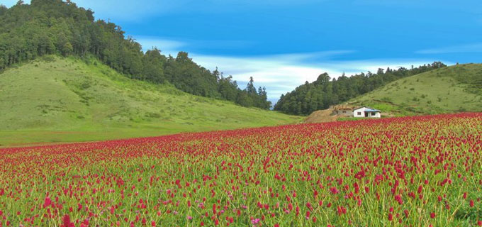 Khaptad National Park Tour