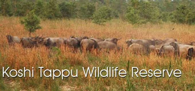 kosi tappu wildlife reserve tour make inquiry the koshi tappu 176 sq ...