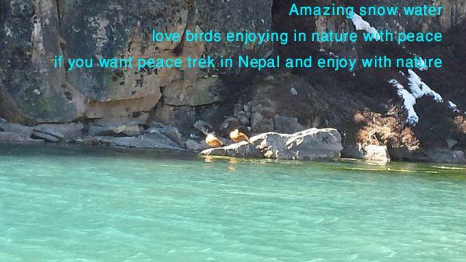 love birds enjoying with peace in quite place like himalaya.