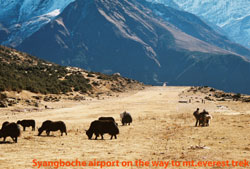 Syangboche airport is situated at the height of 3720 meter.